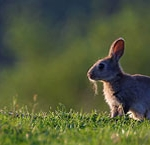 Le parcours du lapin